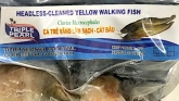 Triple Pearl Yellow Walking Siluriformes Fish Recall [US]